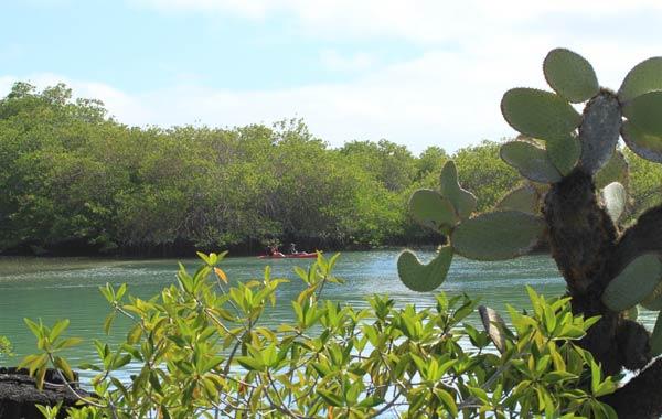 Tortuga Bay aux Galapagos : balade en canoé