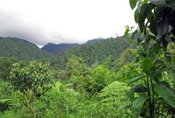 Cloud forest à Mindo en Equateur