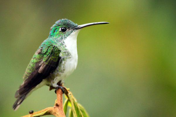 colibri mindo equateur