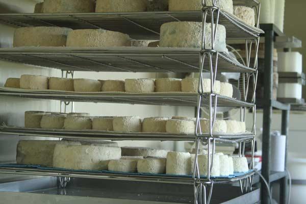 La France côté fromage