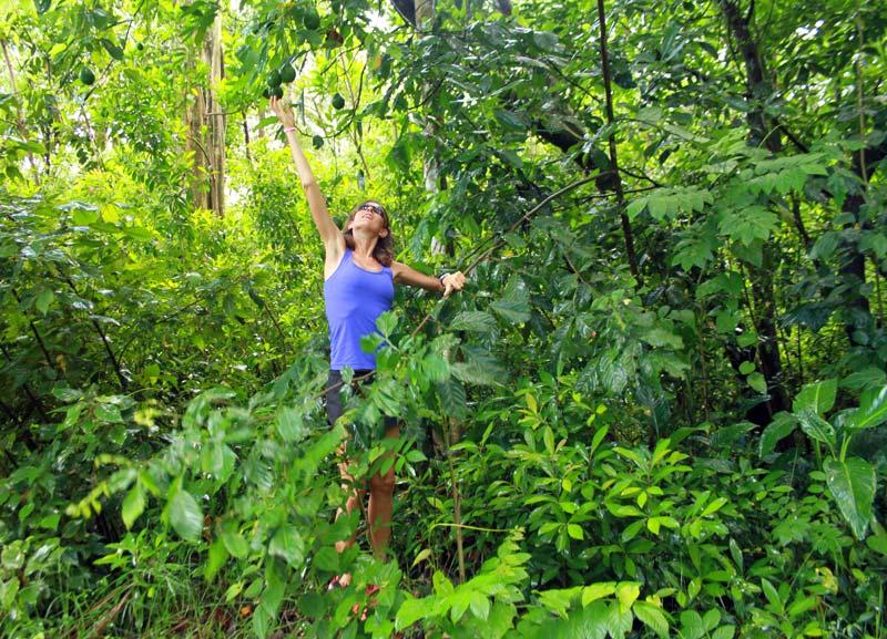 Dominique jardin d'Eden