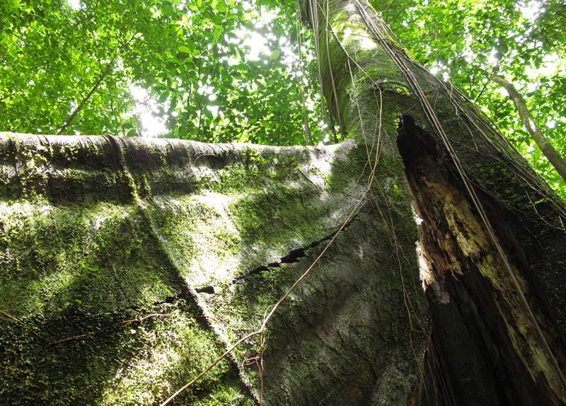Dominique paradis oublié arbres