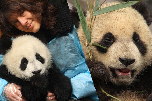 expérience de voyage bénévolat panda