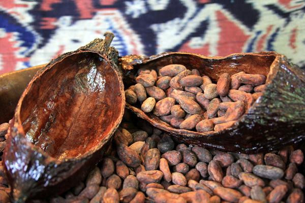 Fèves de cacao au El Quetzal à Mindo
