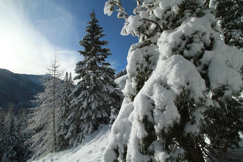 forêt du boréon