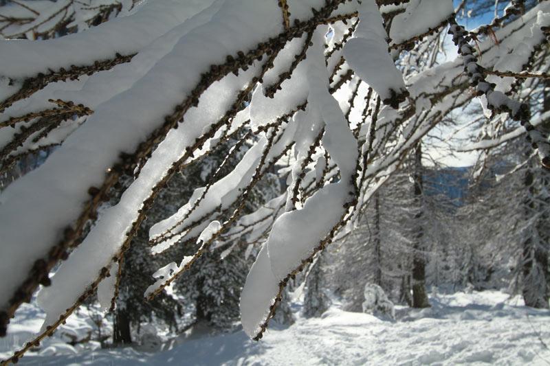 forêt du boréon mercantour