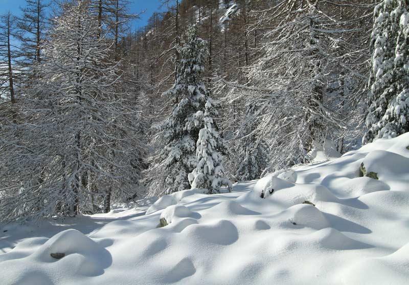 forêt boréon hiver