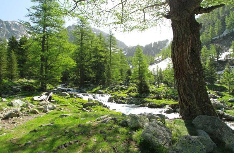 forêt du boréon printemps