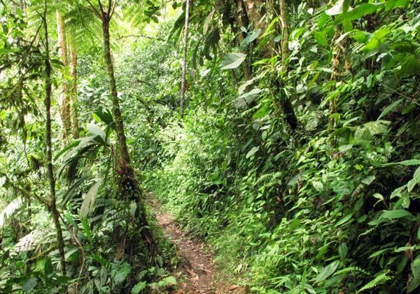 Forêt à Mindo en Equateur