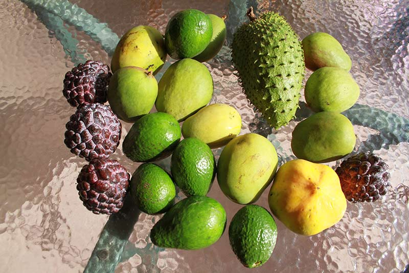 fruits dominique