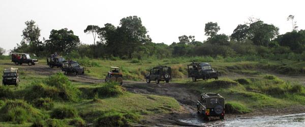 Attroupement de véhicules de safari