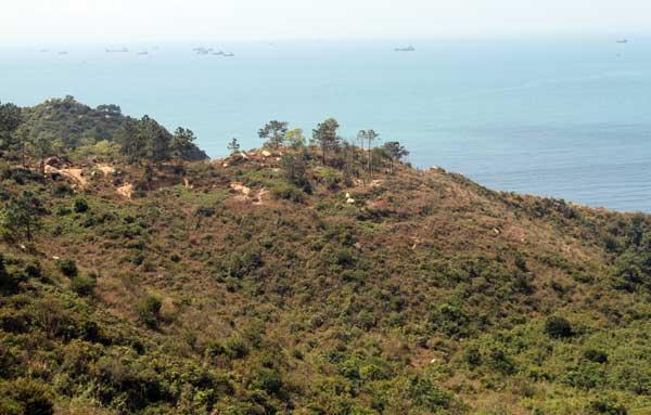 Cadre vert de Lamma Island