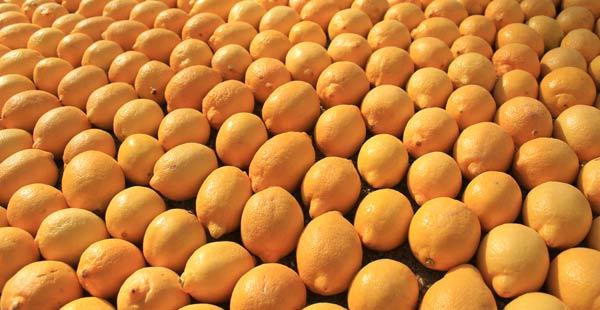 Citrons à la fête du citron