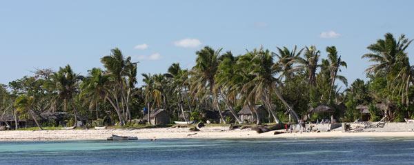Cococtiers sur l'île aux Nattes
