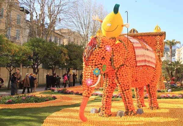 Eléphant d'Inde à la fête du citron