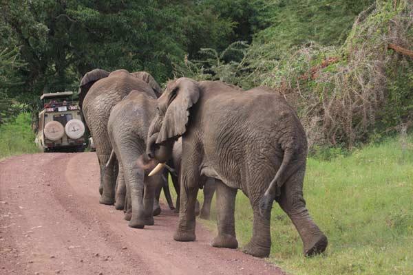 Eléphants dans le Ngorongoro