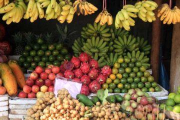fruits voyage