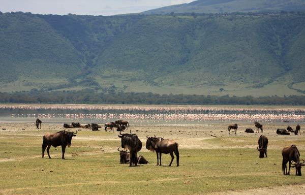 Flamants roses dans le Ngorongoro