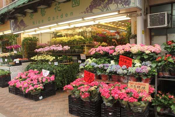 Fleurs colorées sur le marché