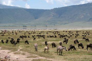 Fond du cratère du Ngorongoro
