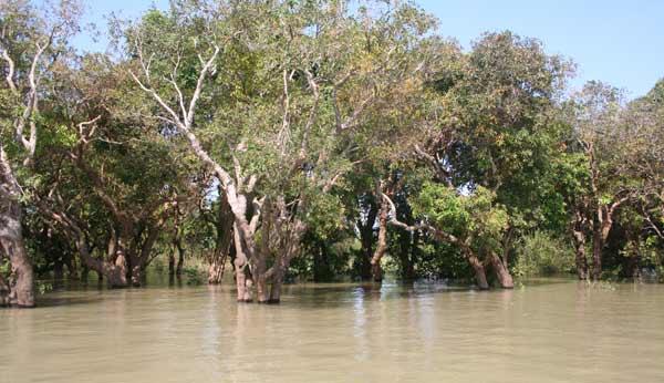 Forêt inondée de Phluk