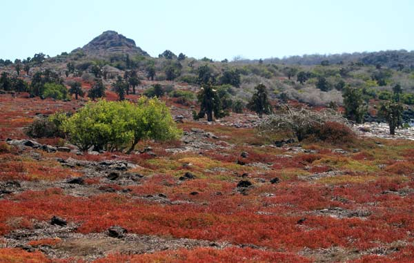 Galapagos : le bout du monde !
