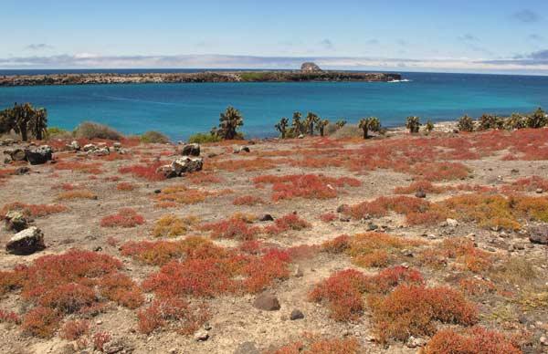 Galapagos : îles Plazas