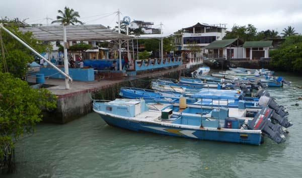 Galapagos, le marché aux poissons