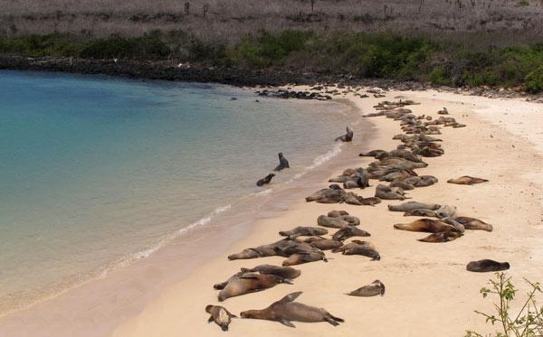 Galapagos, la plage de santa Fé