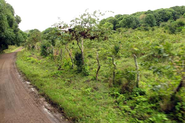 Galapagos : pluie à Floreana
