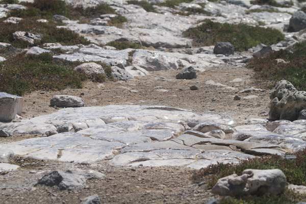 Galapagos : rochers luisants sur Plaza Sur