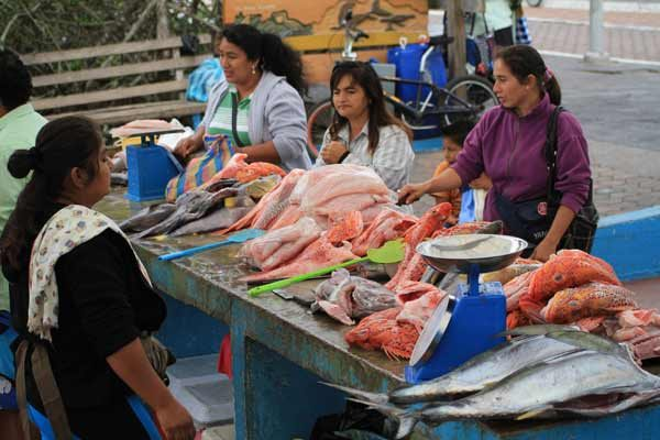 Stand rempli de poissons aux Galapagos