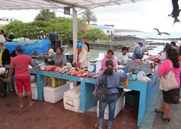 Galapagos, vente de poisson