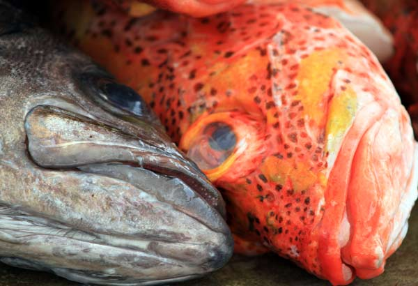 Galapagos, portrait poissons
