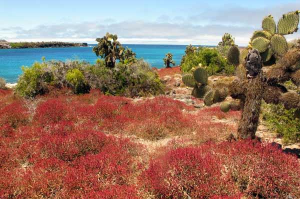 Ile Plazas séjour aux Galapagos