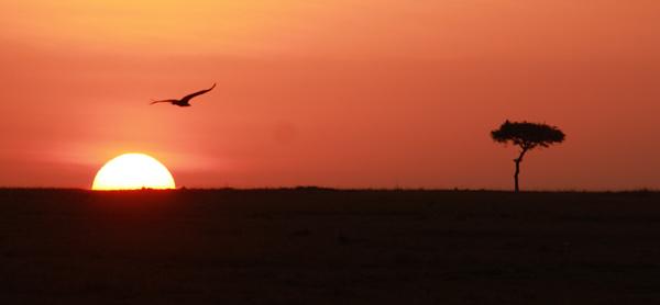 Lever du soleil en safari