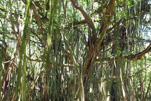 Végétation luxuriante sur Aride