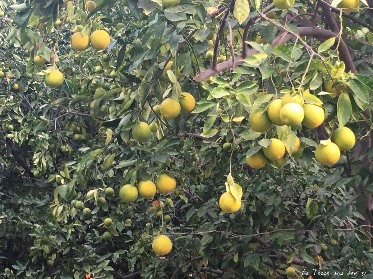 oranger pica