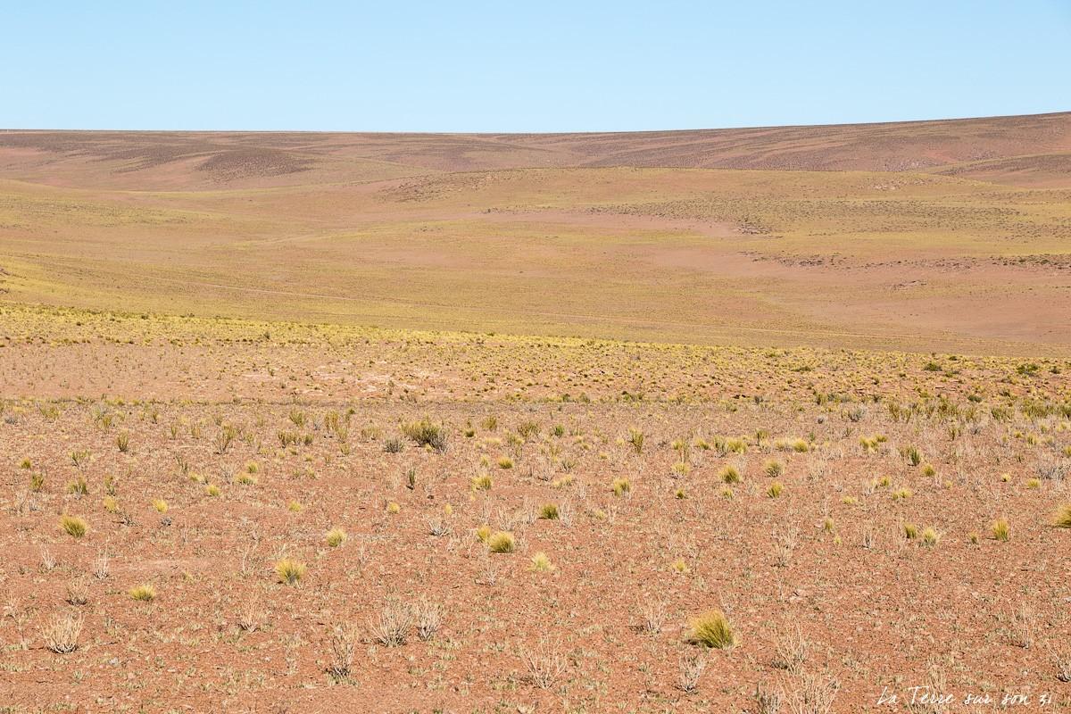 paysage route salar de huasco