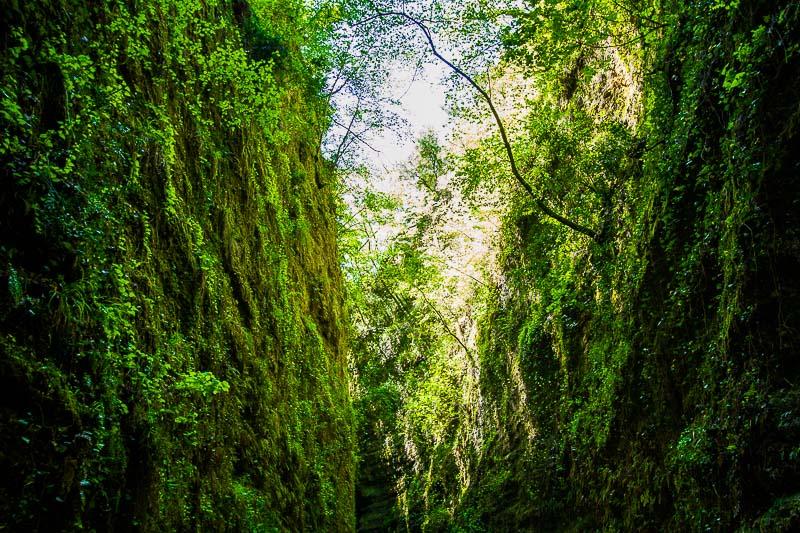 végétation vallon obscur du Donaréo