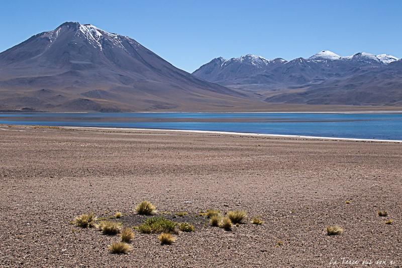 lagune miscanti atacama chili