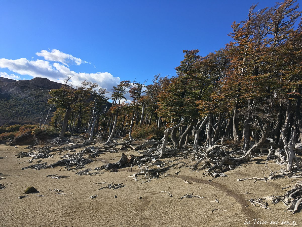 paysage rando fitz roy argentine