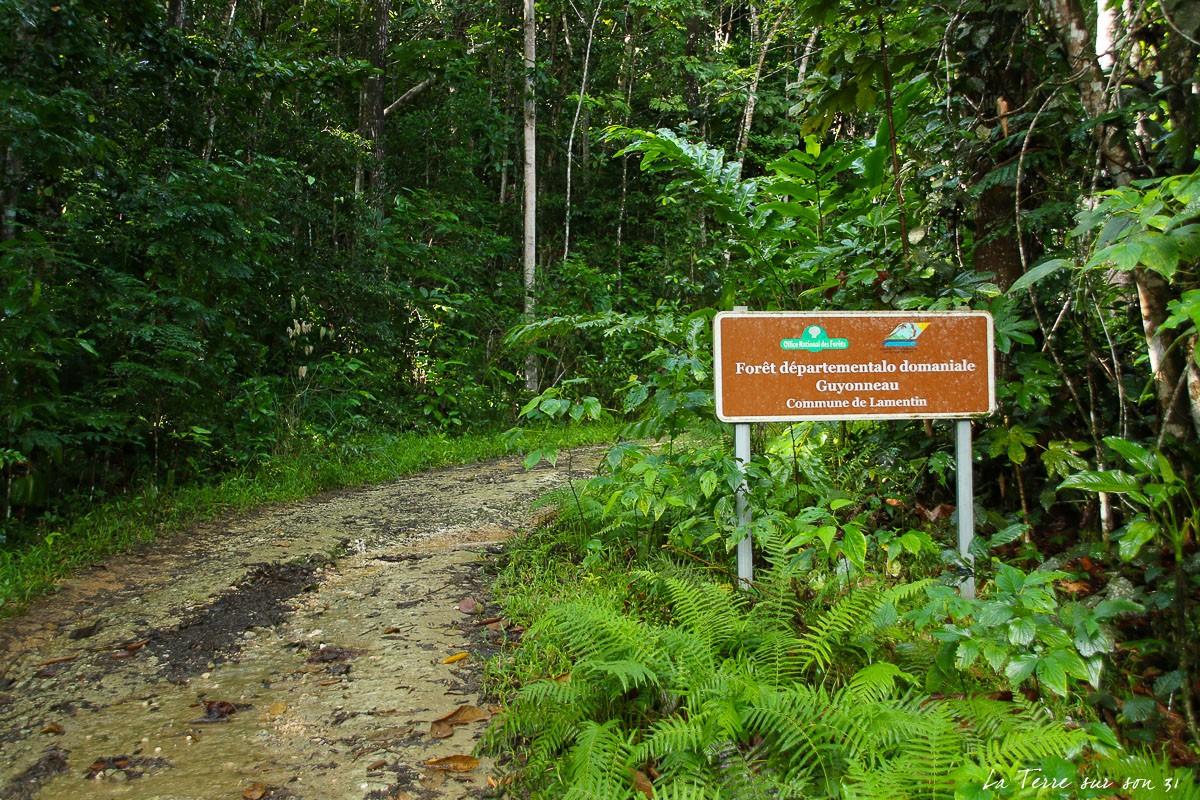cascade de bois bananes foret guyonneau