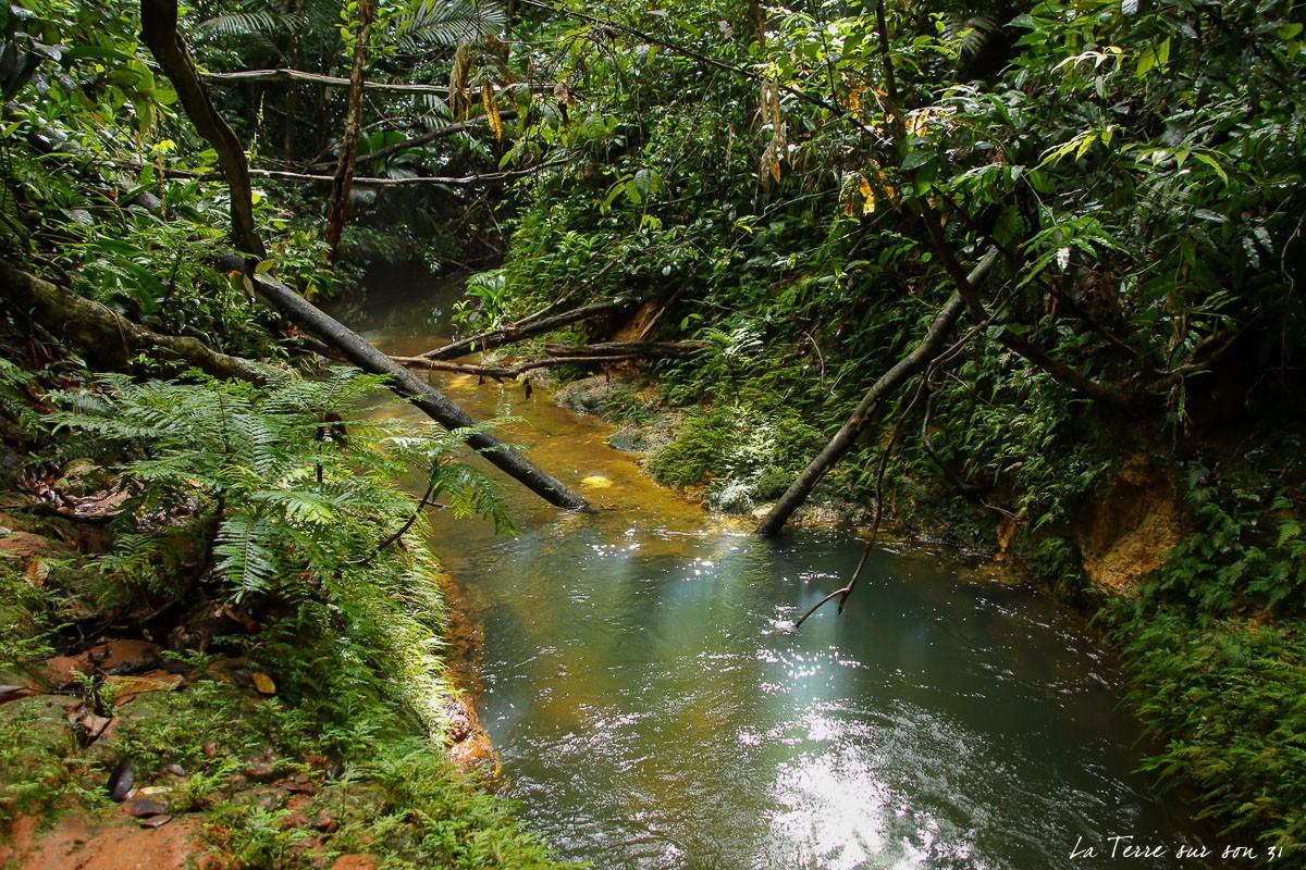 cascade de bois bananes foret
