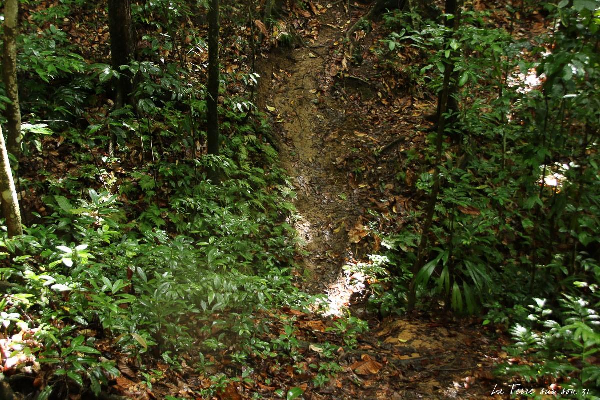 cascade de bois bananes guadeloupe ravine