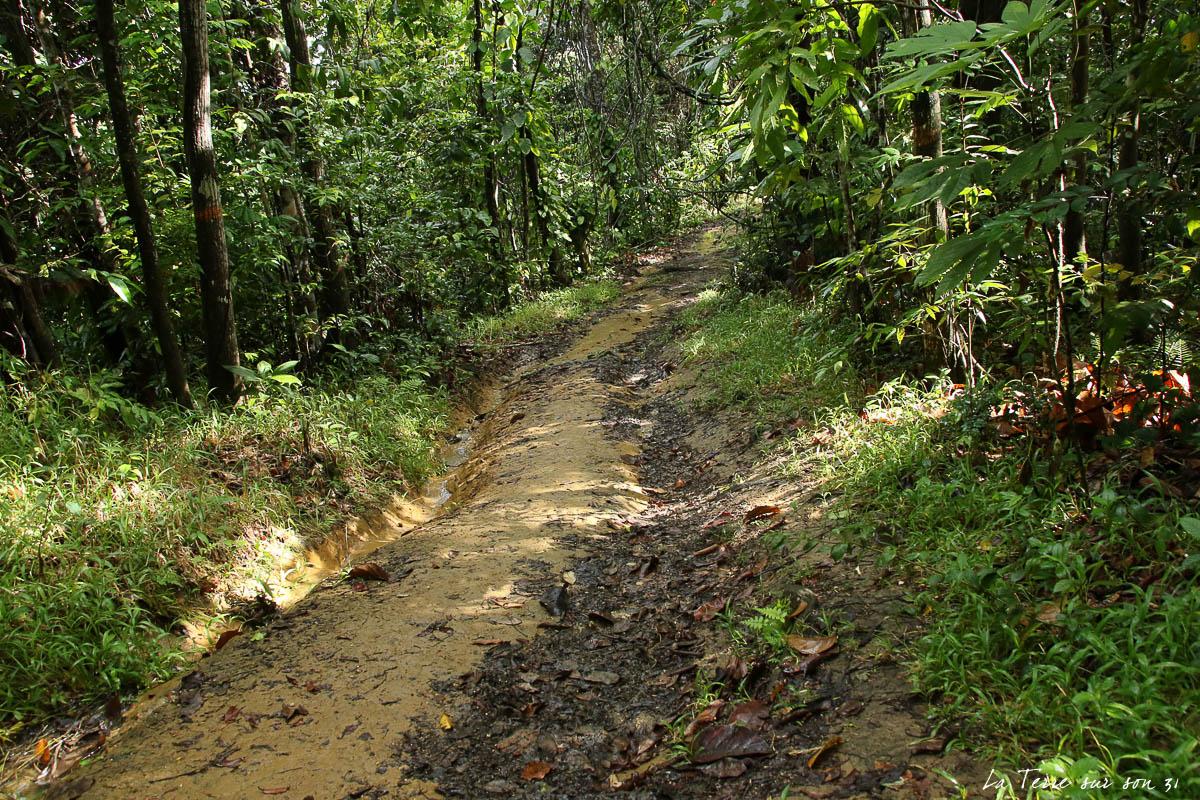 cascade de bois bananes chemin descente