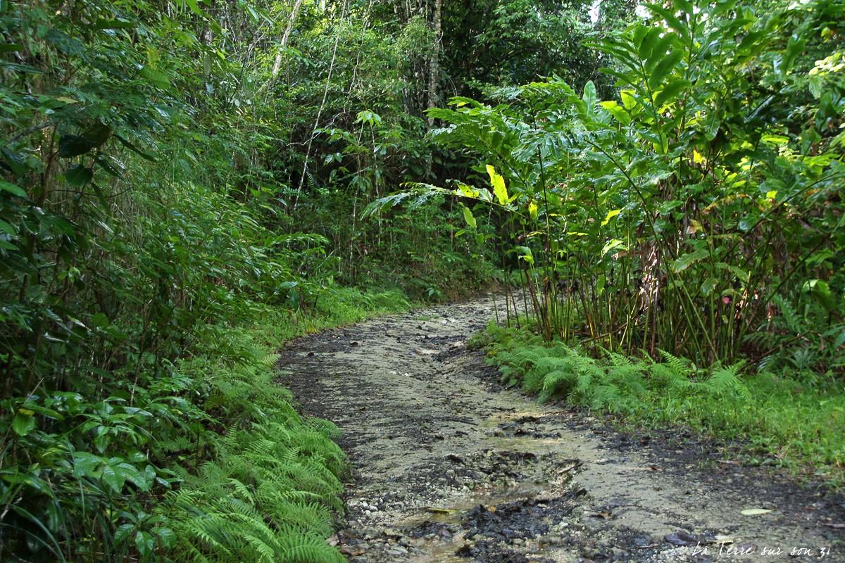 sentier forestier foret guyonneau guadeloupe