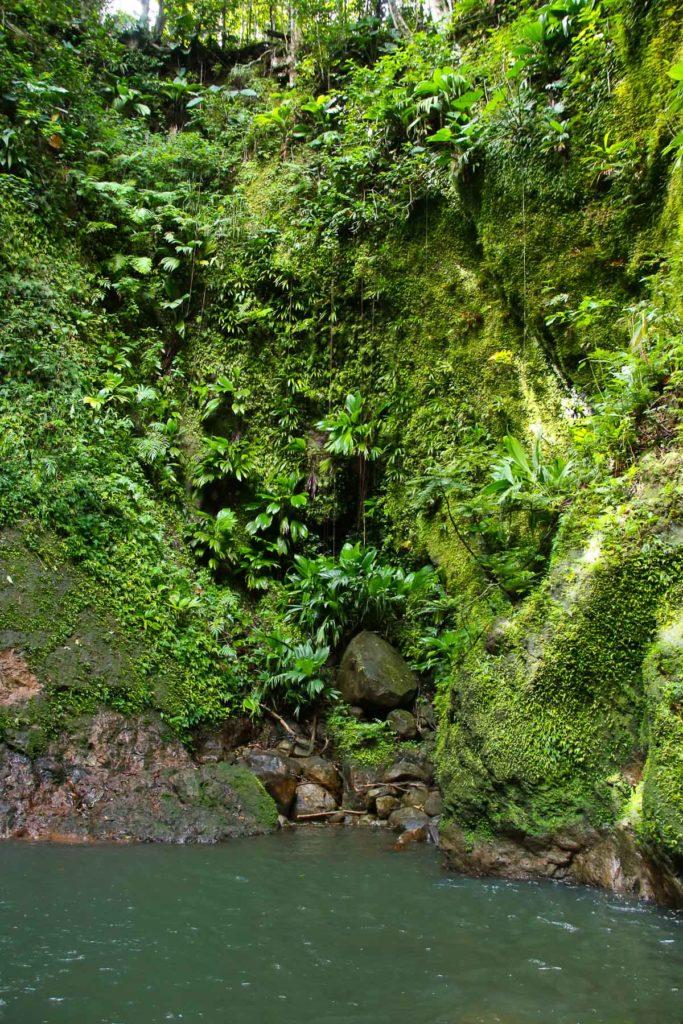 cascade de bois bananes mur végétal