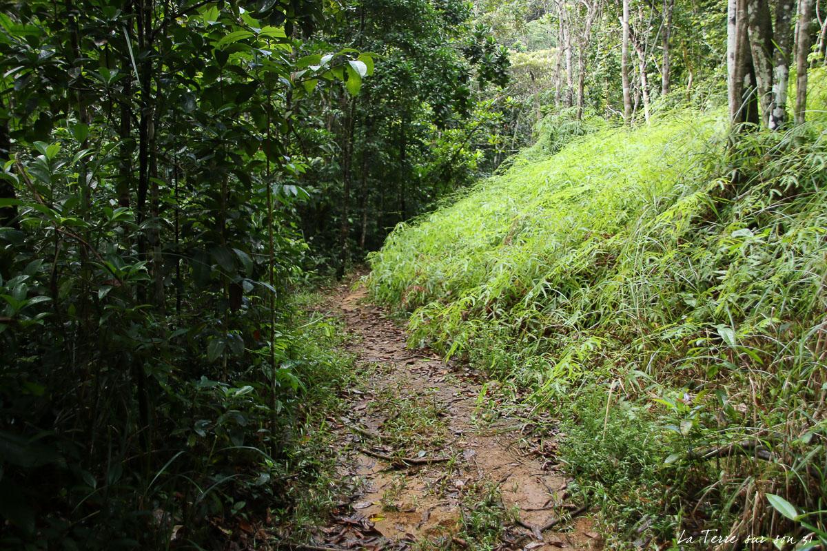 chemin cascade de bois bananes
