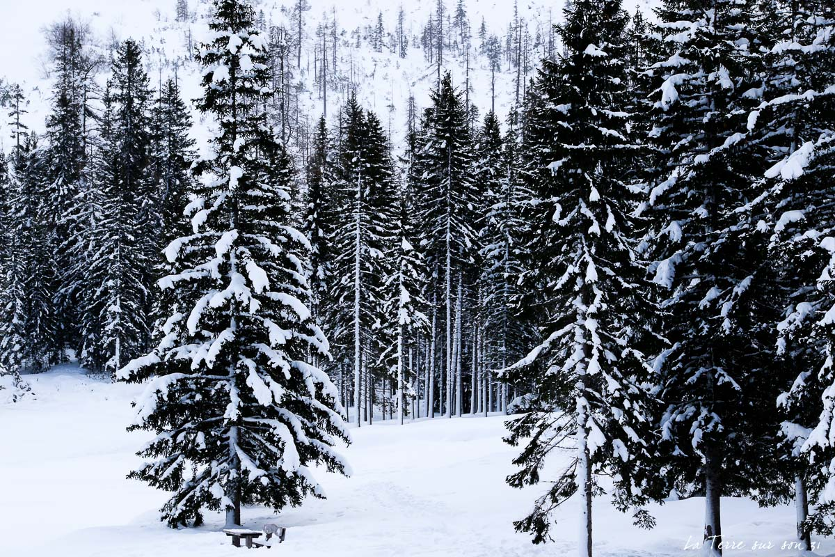 dolomites hiver sapins